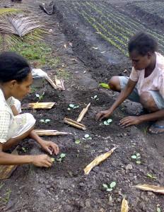 Horticultural school Kimaam