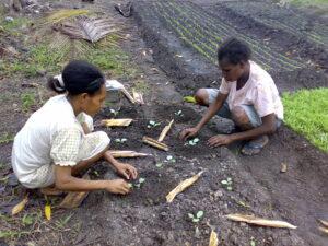 Kimaam-studenten-tuinbouw