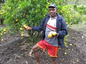 Sinaasappelkwekerij-Tani