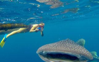 whaleshark Papua